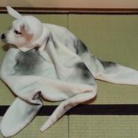 平成二十七年一月 南総里見八犬伝 序幕 本郷円塚山の場 犬江親兵衛 小道具1